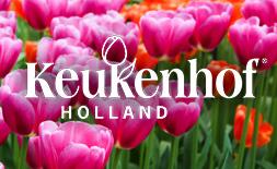 Keukenhof Flower Festival