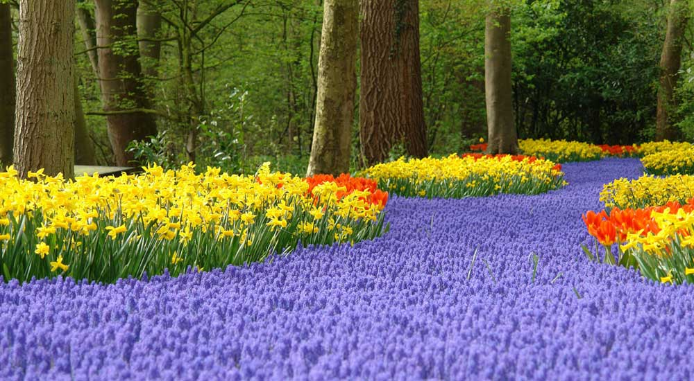 lisse-keukenhof-flower-festival